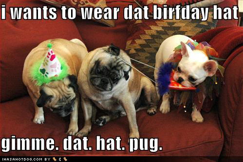 funny-dog-pictures-birthday-hats